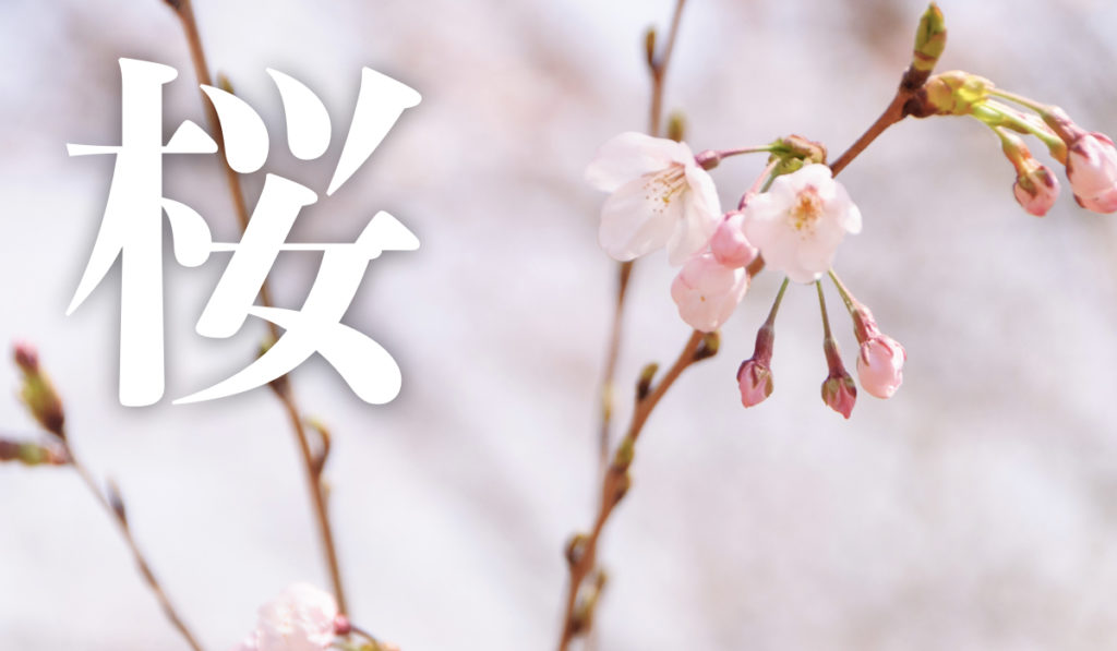桜の季節がやってきた! 桜撮影のおすすめまとめ